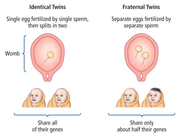 DNA and Identical vs  Fraternal Twins | DNA PLUS